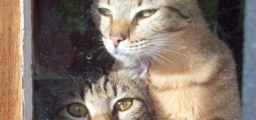 Adoptez un chat
