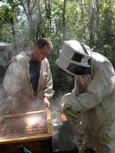 Un élève en tenue d'apiculteur envoie de la fumée dans la ruche. Les abeilles croient à un incendie, elles se regroupent et n'attaquent pas.