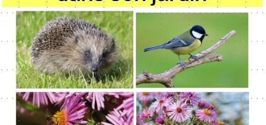 biodiversité dans son jardin - infosainto - saint orens